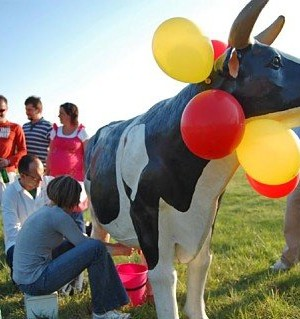 Krowa do dojenia - atrakcje na imprezy plenerowe oraz imprezy typu indoor.