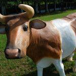 krowa do dojenia brązowa