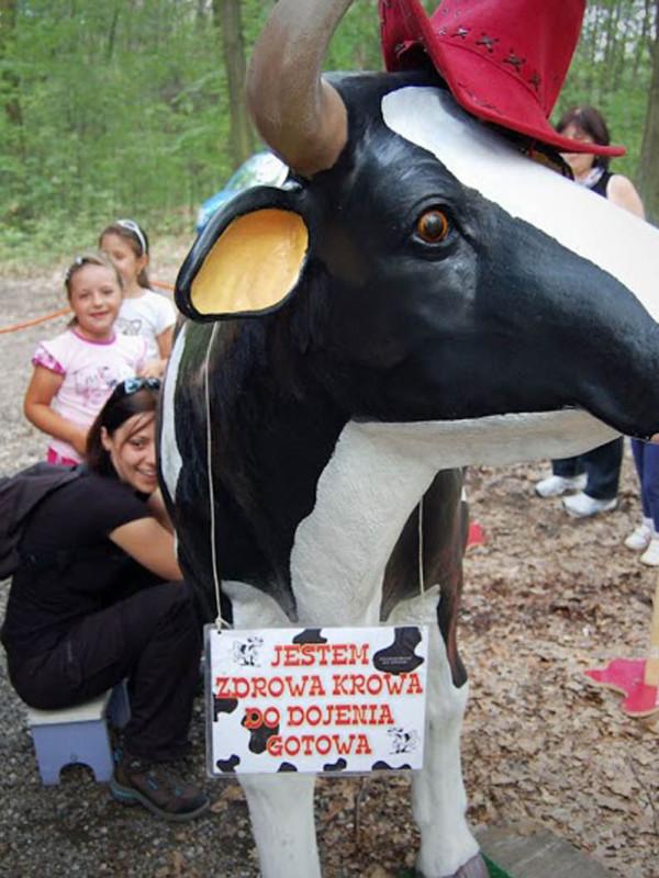 krowa-do-dojenia-gotowa-w-lesie