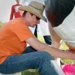 rywalizacja krowa do dojenia i dojarz