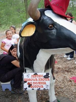 Krowa do dojenia - atrakcja na imprezy plenerowe, wewnątrz obiektów, dożynki, dni miast, gmin, urodziny i inne uroczystości